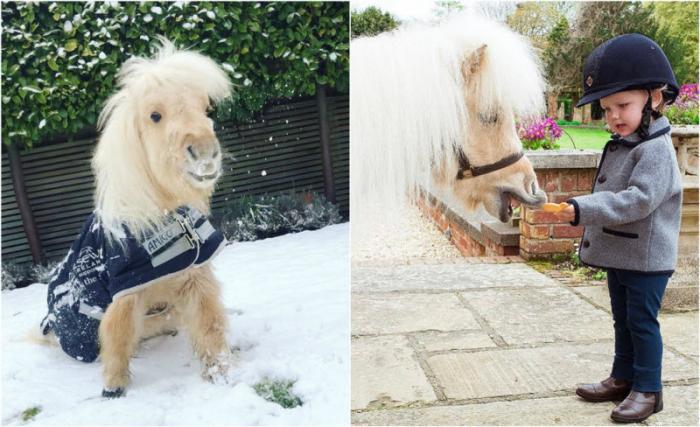 Двухлетний пони стал звездой Instagram (15 фото)