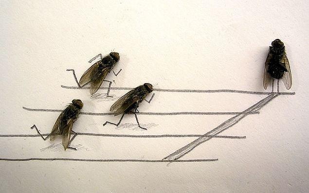 Креативная карикатура на человека с участием мух (7 фото)