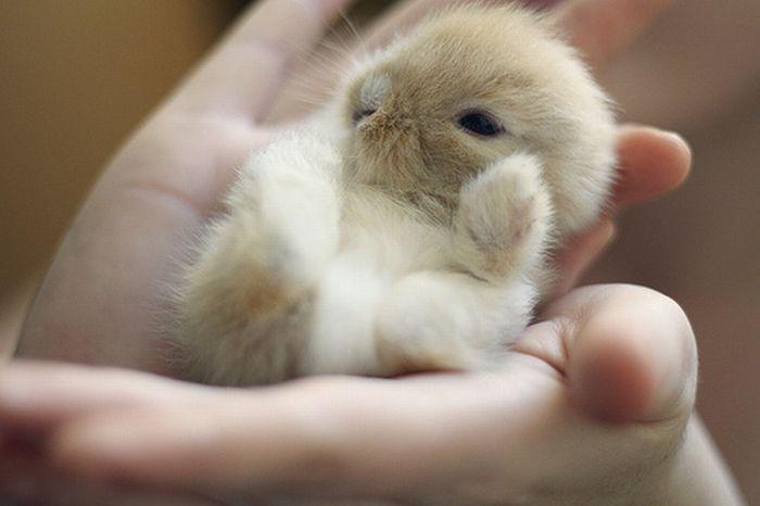 Крошечные животные (37 фото)