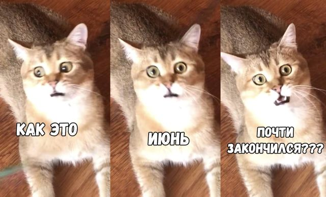 Подборка прикольных фото №1898 (47 фото)