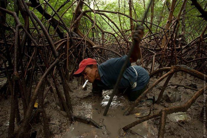 Ловец крабов из Бразилии (8 фото)