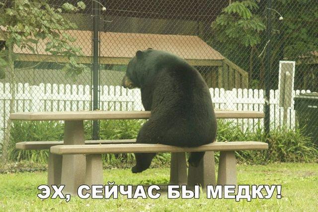 Смешные картинки для хорошего настроения (20 фото)