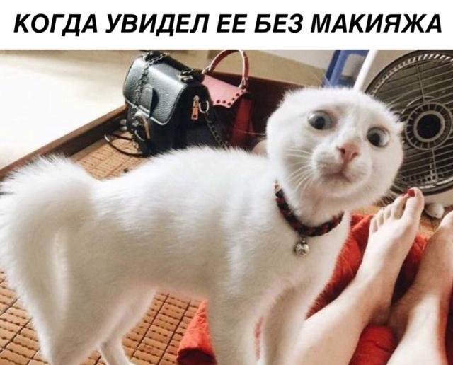 Подборка прикольных фото №1935 (42 фото)