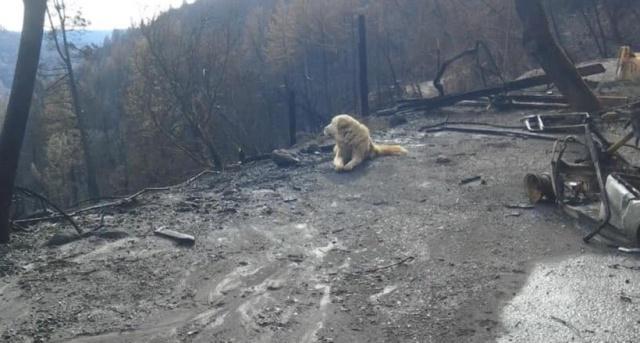 Пес почти месяц ждал хозяев у сгоревшего дома (3 фото)