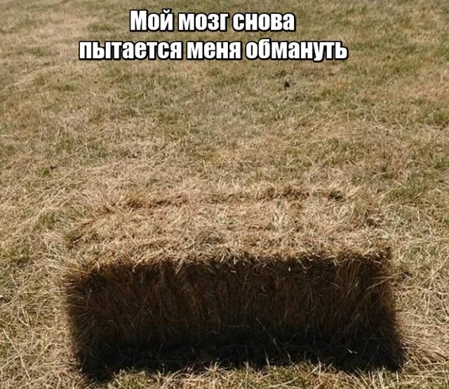 Подборка прикольных фото №2041 (41 фото)