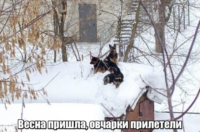 Подборка прикольных фото №2062  (42 фото)