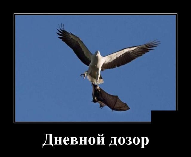 Демотиваторы №2066  (30 фото)