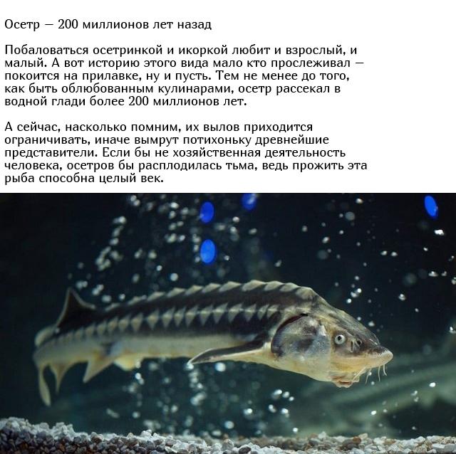 Древние существа, которые живут на нашей планете много лет (10 фото)