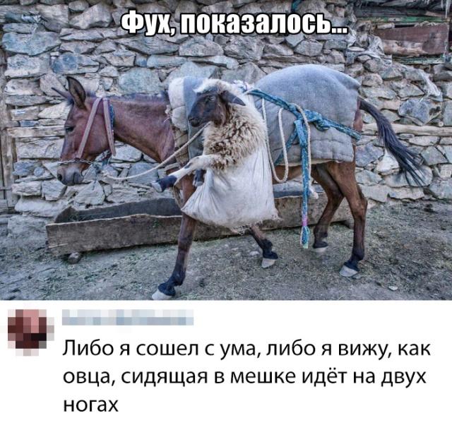 Подборка прикольных фото №2183 (60 фото)