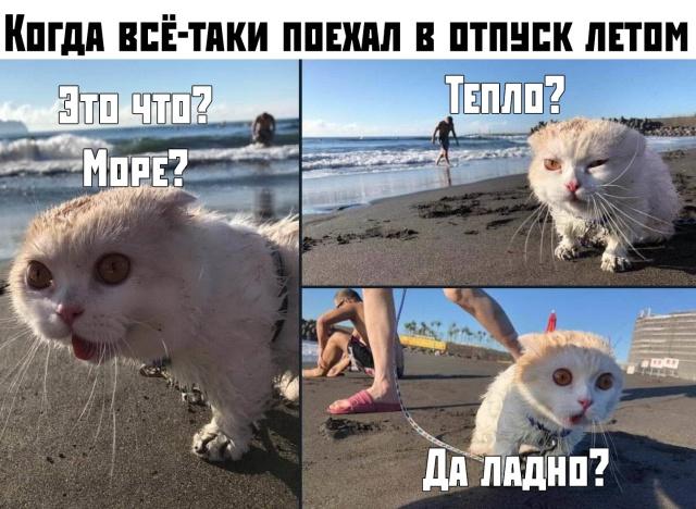 Подборка прикольных фото №2184 (59 фото)