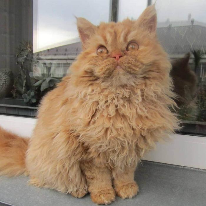 Какой корм для кошки посоветуете? - недорогой корм для