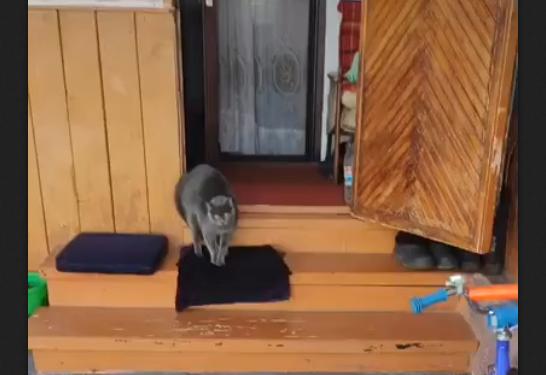 Усатое превосходительство (видео)